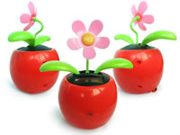 Spy Flower Pot Camera In Sagar
